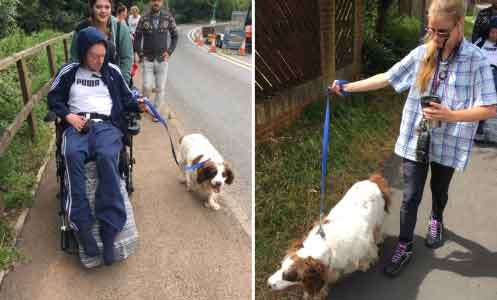 service users from the Woodmill walking dogs
