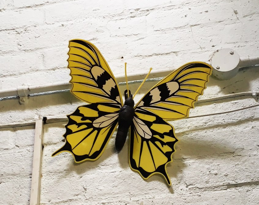 Shinewater Court butterfly.JPG